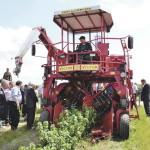 На Волыни — одна из крупнейших плантаций смородины в Европе
