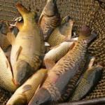 Для арендаторов водоемов определили места для торговли свежей рыбой