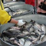 Арендаторы водоемов получили места для продажи свежей рыбы